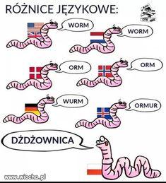 Wiocha.pl - Absurdy polskiego internetu: Nasza-Klasa, Facebook, Fotka, Nk, Polityka - Poczekalnia strona 5