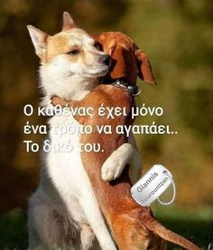Greek Quotes, True Words, Animals And Pets, Corgi, Cats, Life, People, Design, Animal Pictures