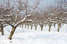 How To Prune Your Fruit Trees via @modfarm