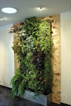 Ce mur vegetal apporte un espace naturel et reposant au sein de l'habitation Son encombrement minimum permet de trouver sa place aussi bien