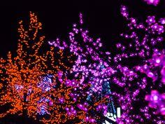 Gatlinburg Trolley Tour of Lights