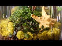 How to Make a Terrarium- your own little garden world