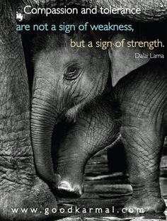 Compassion and tolerance are not a sign of weakness, but a sign of strength. - Dalai Lama In the world of my business, we stand for compassion and tolerance. Dalai Lama, Great Quotes, Quotes To Live By, Inspirational Quotes, Motivational, Awesome Quotes, Mantra, Elephant Quotes, Elephant Stuff