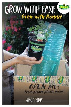 Garden Yard Ideas, Garden Beds, Garden Projects, Garden Plants, Indoor Plants, Container Gardening, Gardening Tips, Home Vegetable Garden, Plants Online