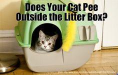Pee Outside Litter Box