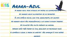 Arara-azul: curiosidades, características e habitat - Escola Kids Crafts For Children