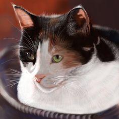 A pet portrait for a friend, Kalika