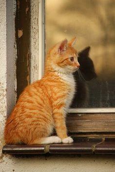 orange tabby cat, tiger cat, kitten, orange kitten