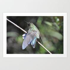 Hummingbird Stretch  Art Print by Judy Grant  - $15.60