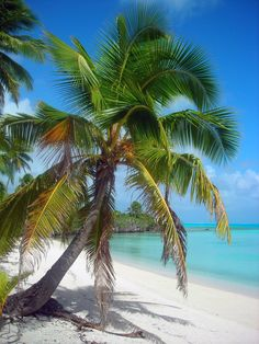 Beaches Cook Islands-Aitutaki von Martin Hopkinson Neck Tie Tying Shirts, pants, shoes and other app Cook Islands, Beautiful Places To Visit, Beautiful Beaches, Places To Travel, Places To Go, Islas Cook, Palmiers, Tropical Beaches, Island Beach