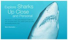 Shark Reef