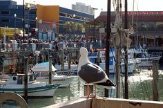 """The true meaning of a """"Birds Eye View"""" as this seagull watches the tourists at the pier enjoying the sights of the Embarcadero, which is located In San Fransisco and in November of 2002 was added to the National Register of Historic Places."""