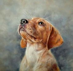 Realistic Paintings, Realistic Drawings, Animal Paintings, Dog Drawings, Raining Cats And Dogs, Watercolor Animals, Dog Portraits, Dog Art, Animals Beautiful