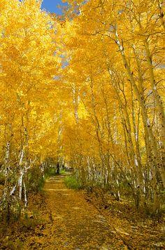 Fall in June Lake