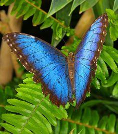 Blue #Butterfly