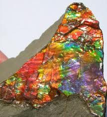 Ammolite in the Rough.  This piece of ammolite is still on its host matrix and has not been processed into jewelry.To do that requires an infusion of hardening epoxy to harden the gem material because is soft as in a pearl.Then it has to be cut properly and go through an exhaustive polishing process before it goes from being a specimen to a gem.  Or it might be kept as is for followers of Feng Shui who attach much importance to Ammolite.