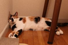 Cat cat cat<3      前回、ライターの大山さんからバトンを受け取りました、常山です。いえなか習慣というお題を受けて、どんな習慣があるかといえのなかを見...
