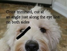 australian labradoodle grooming instructions - I assume this will work just fine with my aussiedoodle