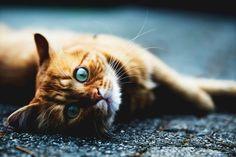 Cats Who Love Wilderness Adventures #bengalcats #catswelove #adventurecats #animaltherapy