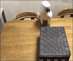 Funny animal gifs - part 270, funny gifs, animals