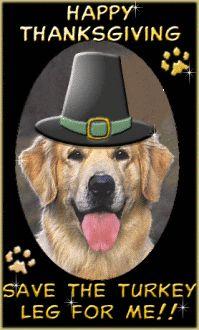 Happy Thankgiving Funny Memes Dog Cat