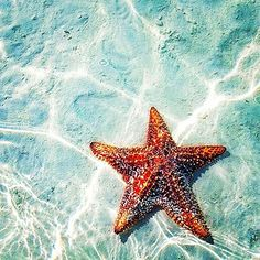 One of these days I am going to find one of these ~ Starfish