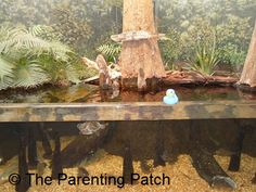 The Duck at the Dauphin Island Estuarium: The Rubber Ducky Project Week 6 | The Parenting Patch