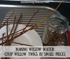 Willow water helps cuttings for garden plants to take root quicker and more reliably. It is literally free and only takes a few minutes to make. It contains a natural rooting hormone that is leached out from willow branches.