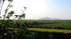 Vineyards of Tacama, Ica, Peru Backpacking Peru, Lake Titicaca, Machu Picchu, Vineyard, Coast, Vine Yard, Vineyard Vines