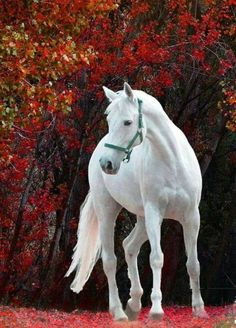 These horses are beautiful Majestic creatures beautiful all white horse Most Beautiful Animals, Beautiful Horses, Beautiful Creatures, Beautiful Clothes, Cute Horses, Horse Love, Horse Photos, Horse Pictures, Animals And Pets