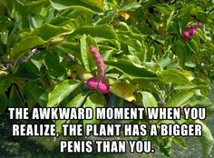 the awkward moment when your plant has a bigger penis than you - Dump A Day