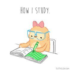 Slothilda Sloth Study