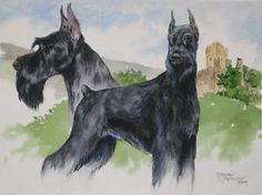Giant Schnauzer by Canine Art ~ x Schnauzer Art, Giant Schnauzer, Schnauzers, Schnauzer Gigante, Best Guard Dogs, Dog Pin, Cute Animals, Horses, Cats