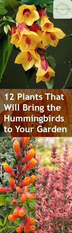 12 Plants That Will Bring the Hummingbirds to Your Garden -