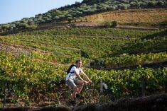 5th UNWTO Global Conference on Wine Tourism | UNWTO Wine Tourism, Visit Portugal, Sustainability, Conference, Articles, Europe, Events, News, City