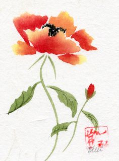 Botanical poppy flower drawing margaret dickinson gallery the orange poppy flower mightylinksfo