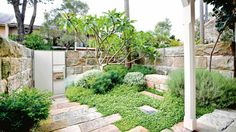 Clever planting and positioning can create a high impact yet low maintenance garden as seen in this coastal garden. Photography by Michael Wee.