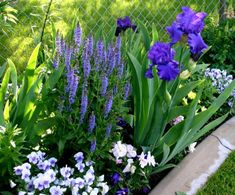 Flower beds from only three perennials - The minimum number of plants needed to create a flower garden is three. Plants, Landscaping With Rocks, Garden Bulbs, Iris Garden, Annual Plants, Flower Garden, Garden Shrubs, Iris Flowers Garden, Cottage Garden