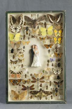 -Laurent Gauthier-  *Boites à insectes.  'Le mariage'  (technique mixte. 2014)