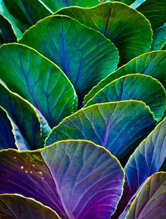 afternoontea7:  Colors Of The Cabbage Patch Photograph by Christi Kraft