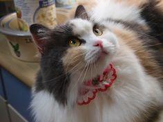 Birthday cat Syrup. 2011