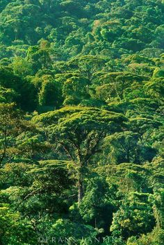 Green,  green is my beautiful Costa Rica  Pura Vida !!