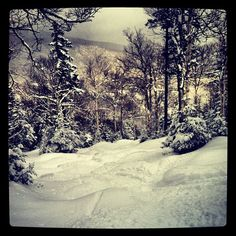ell, here I am #madriverglen #vermont #skiing #woods #firsttracks #powder