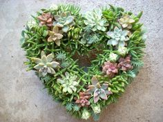 Wedding Flowers: How to Feature Succulents in your Decorations. From succulent wreaths to succulent arrangements, we have creative wedding flower ideas! Succulent Boutonniere, Succulent Bouquet, Succulent Wedding Centerpieces, Succulent Arrangements, Different Types Of Succulents, Types Of Flowers, Succulent Gardening, Succulents Garden, Wedding Wreaths