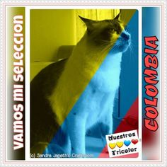 Selección Colombia, Gatos