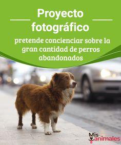 Proyecto fotográfico pretende concienciar sobre la gran cantidad de perros abandonados  En el mundo existen millones de perros abandonados. Para evitarlo, infórmate sobre este proyecto que fomenta la adopción mediante el montaje de fotografías. #fotografía #proyecto #abandono #curiosidades