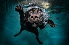 http://www.littlefriendsphoto.com/index2.php#!/3/underwater_dogs/1  Underwater Dogs by  Seth Casteel