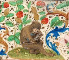 Monkey holding cat, from Trivulzio Book of Hours, 1400s. Koninklijke Bibliotheek