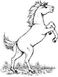 Horses coloring pages. Download and print horses coloring pages