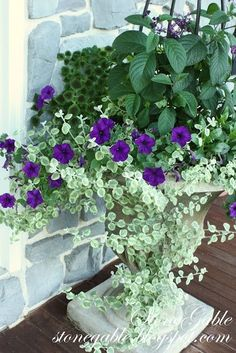 front porch planter with purple flowers